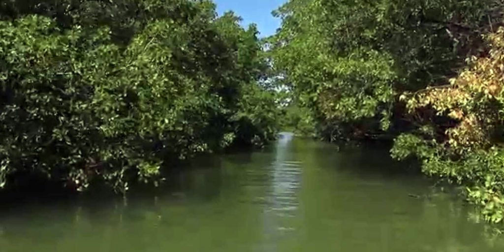 mangue do rio jaguaribe